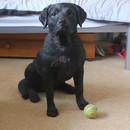 miniature pour Un chien entrainé à rester immobile
