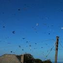 miniature pour 1 heure de vols d'oiseaux en 1 minute