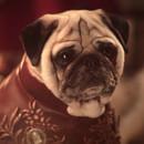 generique-game-of-thrones-chiens-carlin