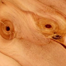 miniature pour IRM d'un tronc d'arbre
