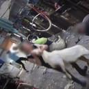 miniature pour Moutons battus pour leur laine