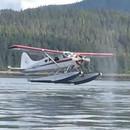 miniature pour Un avion a failli se poser sur une baleine