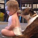miniature pour Un bébé se fait lécher par un chien