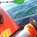 kayak-souleve-par-baleine