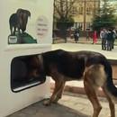 pugedon-distributeur-pour-chiens-abandonnes