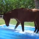 miniature pour Un cheval qui s'amuse dans une piscine