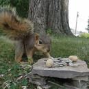 ecureuil-baise-camera-gopro
