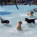 miniature pour Journée piscine pour les chiens