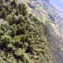 wingsuit-sapins