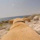 miniature pour Un chien court vers la mer