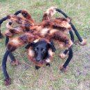 chien-costume-grosse-araignee-camera-cachee