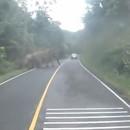 elephants-bloquer-route-moto