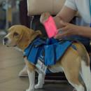 chien-rapporte-objets-perdus-avions
