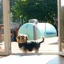 chien-croit-porte-fermee