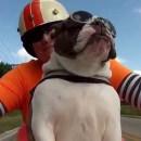 miniature pour Un chien salue un motard
