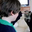 miniature pour Des retrouvailles émouvantes avec leur chat disparu