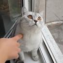 miniature pour Un chat pétrifié