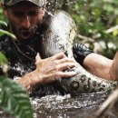 experience-avaler-par-anaconda