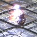 miniature pour Raquette à mouches électrique en Slowmotion