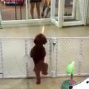 chien-excite-revoir-maitre