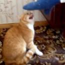 miniature pour Un chat qui cherche à tuer un ado