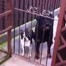 chien-qui-dit-hello
