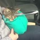 miniature pour Un chat avec un couteau dans la tête