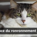 reponse-pourquoi-chat-ronronne