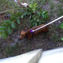 miniature pour Récupérer une balle chez les voisins avec son chien