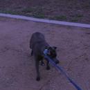 chien-plus-grande-peur