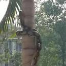 serpent-grimpe-arbre