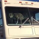 chien-emmerde-camping-car