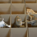 paradis-des-chats