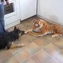 chien-peur-tigre-peluche