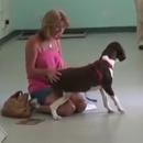 chien-tetraplegique-marcher-premiere-fois
