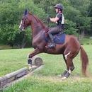 miniature pour Un cheval et son premier saut de fossé