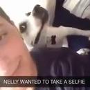 chien-aime-selfies