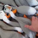 armee-canards-plastique