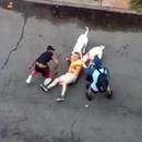 miniature pour Deux pitbulls fous attaquent un homme