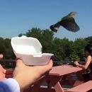 miniature pour Au revoir petit oiseau