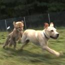 miniature pour Un guépard et un chien meilleurs amis