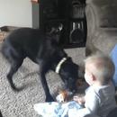 chien-jouer-bebe-rigole