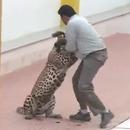 miniature pour Un léopard attaque une école en Inde