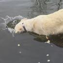 miniature pour Un chien qui pêche le poisson
