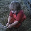 miniature pour Une petite fille aide un mouton à mettre bas