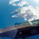 miniature pour Des dauphins qui nagent dans les nuages