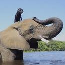miniature pour Un éléphant et un chien meilleurs amis