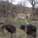 chevre-saute-humain