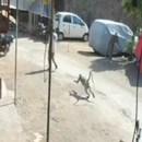 miniature pour Un singe attaque un homme