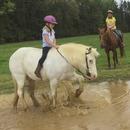 poney-jouer-eau